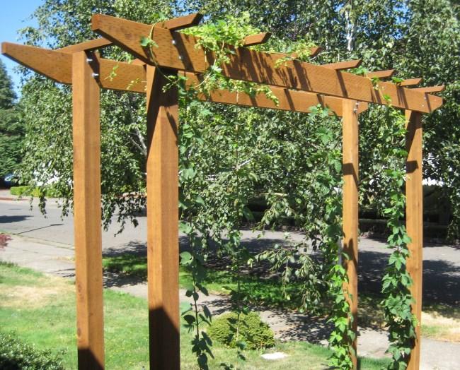 front yard hops trellis