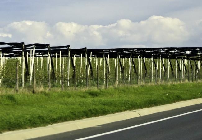 hop farming countryside